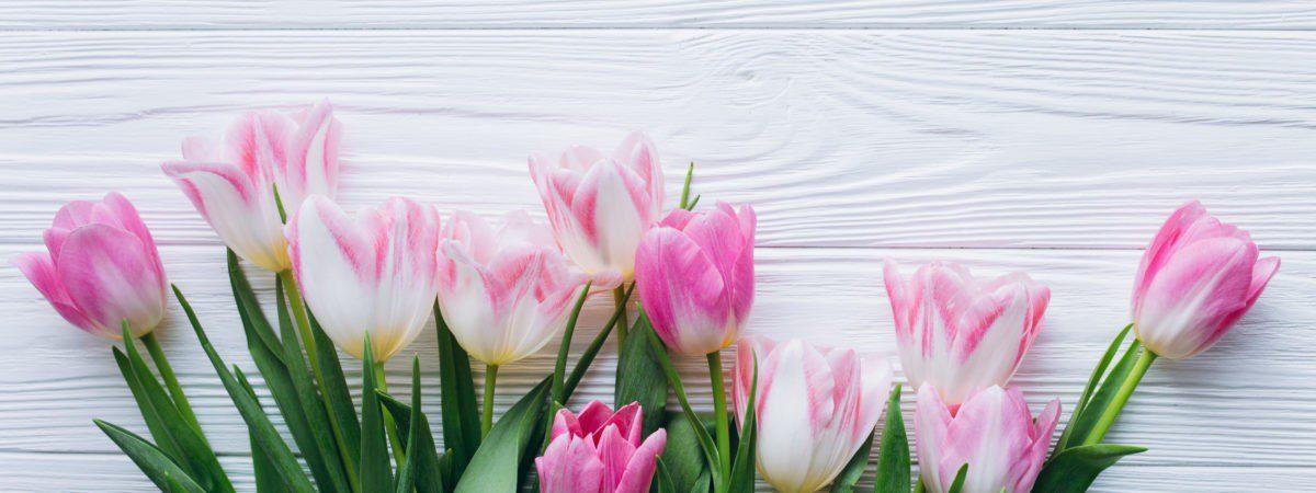 beautiful-rozovye-fresh-wood-pink-tiulpany-tulips-tender-10-1200x450.jpg