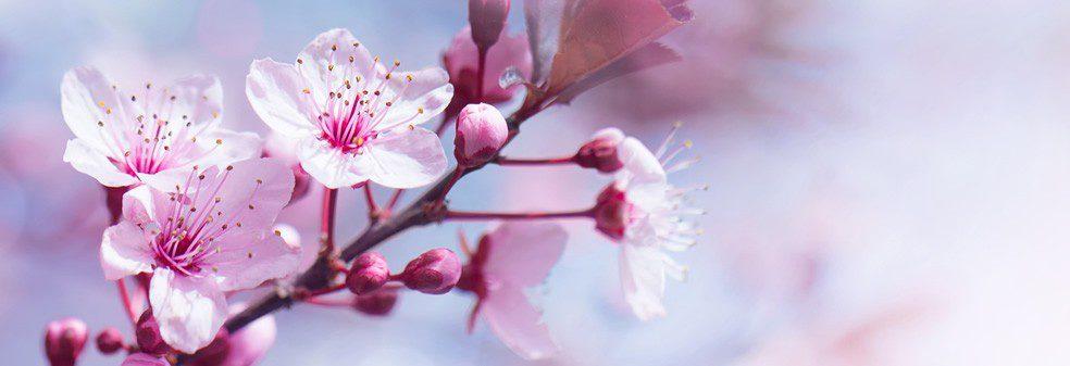 slider-pink-flowers.jpg